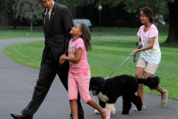 President Obama is welcomed back to the White House by his daughters and his dog
