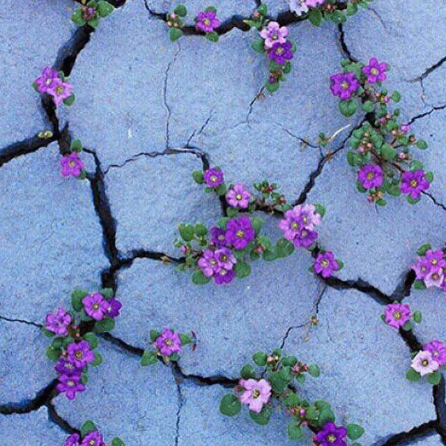 امیدواری عوامل الهی که بذر امید را در قلب می پاشد