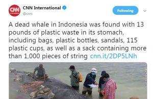 این وال مرد، چون ۱۳ پوند پلاستیک خورده بود+عکس