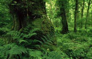 خطر آسیب جبران ناپذیر به قدیمی ترین جنگل های دنیا در ایران